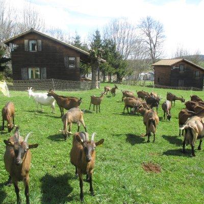 Le troupeau à côté des gîtes